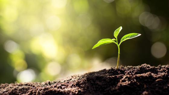 principios de la fotosíntesis